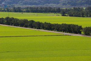 【南さつま市】大浦干拓:先人たちの努力で今に伝えられた広大な田園を見に行こう!