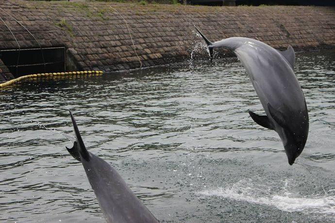 青空イルカウォッチング:無料でイルカを間近に!水族館の粋な演出