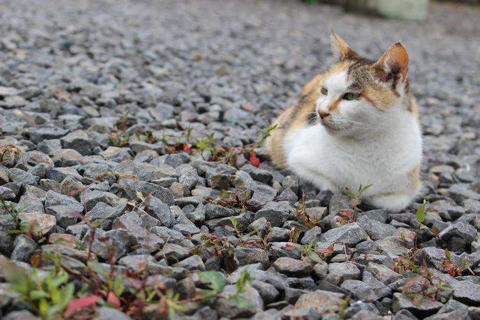 鹿児島に住む猫たち