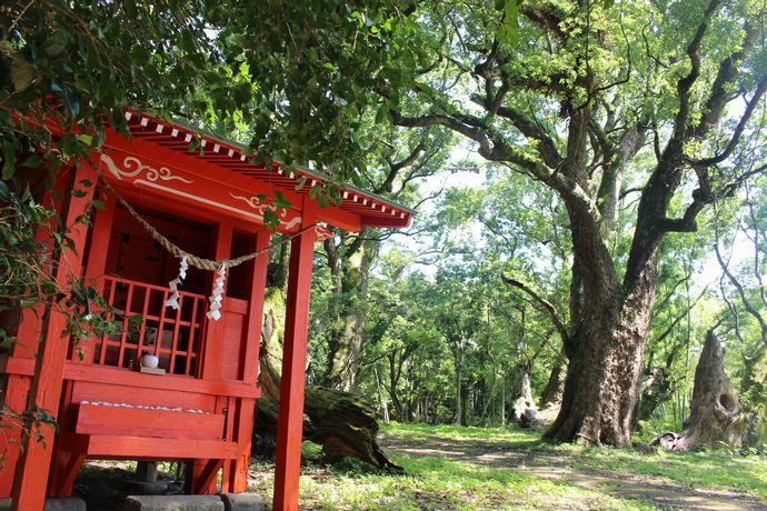 大汝牟遅神社と千本楠:子授けや願掛け、多く古木に恵まれた神秘的な場所【日置市吹上町】