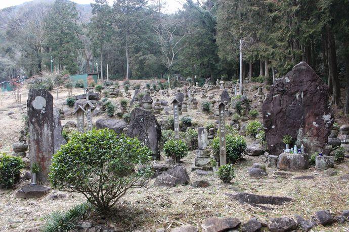 【湧水町】般若寺:鹿児島茶発祥の地の伝承と当時のお茶が群生する場所