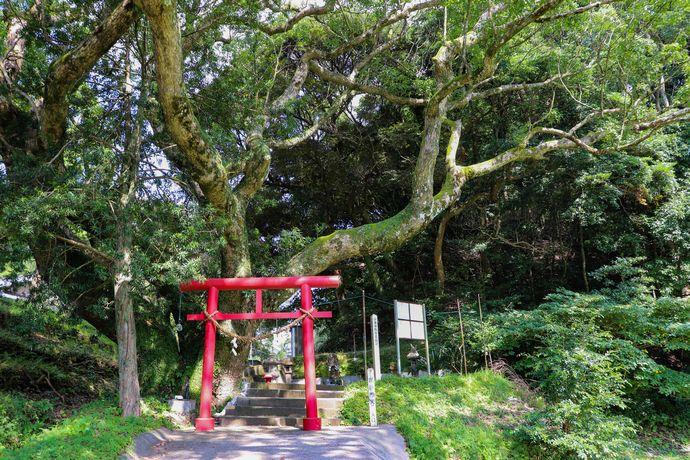 """鎌倉時代から伝わる「毘沙門天」と""""となりのトトロ""""のような世界観の風景"""