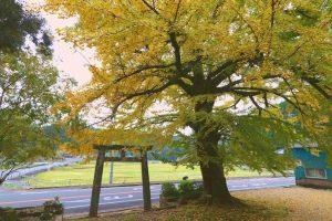 【姶良市】大山祇神社:大きなイチョウの木のある境内で過ごす時間