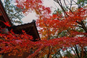 鹿児島の紅葉おすすめスポット