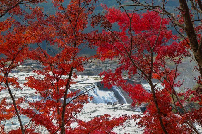【伊佐市】曽木の滝:東洋のナイアガラと紅葉を楽しむ