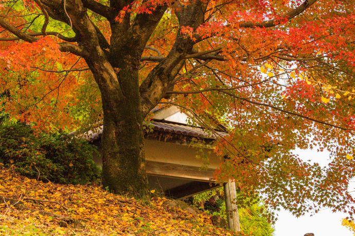 蒲生城跡(城山公園):かつての城跡は春は緑に包まれ秋は紅葉に染まる静かな場所へ【姶良市蒲生町】