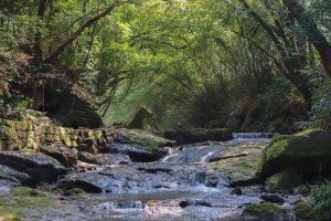 【鹿児島市】彦山神社と直林寺跡と轟の滝 旧松元町散策へ