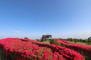 【南九州市頴娃】ツツジの名所であり絶景も楽しめる千貫平自然公園を楽しもう