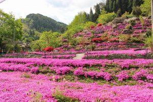 【姶良市蒲生町】花の森 徳重:2株の芝桜から生まれた素晴らしい園と人のあたたかさに感動!