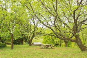 【姶良市蒲生町】蒲生城跡(城山公園):かつての城跡は緑に包まれた静かな場所へ