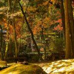 慈眼寺公園にて早朝コスモスの魅力をご紹介