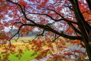 【姶良市】阿良波須神社:蒲生の村社に残る紅葉を眺めながら