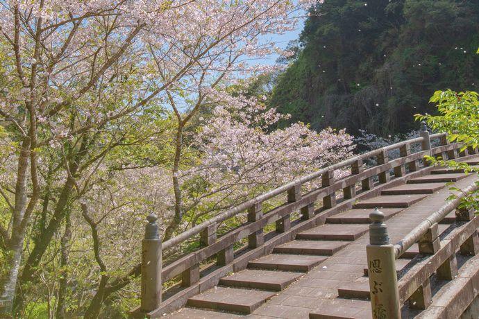 清水磨崖仏(岩屋公園)の桜