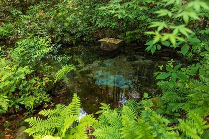 熊野神社の水源
