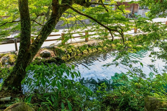竹中池と筒羽野疎水:そうめん流しやプールで有名な湧水と水辺の風景【湧水町】