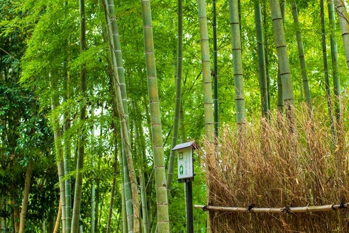 美山の竹林ロードをのんびり歩いてみた【日置市東市来町】