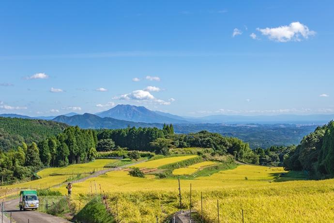 八重の棚田で秋の風景と桜島を眺めながら