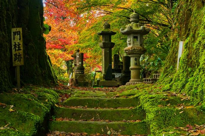 道隆寺跡の紅葉をもっと知ってほしい!って話【肝付町】