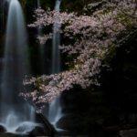 桐原の滝の桜と大川原峡の流れに癒されて