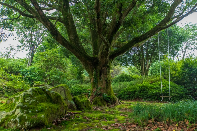 癒しろの杜 桂花園:芝桜や紫陽花など四季折々の自然の姿と造園技術が光る癒しの場所