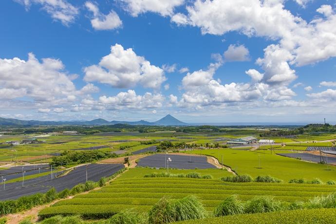 茶ばっけん丘:お茶の生産地としての魅力満載な風景にうっとり