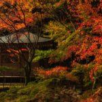 冠岳花川砂防公園:梅雨時期に歩きたい心落ち着く場所