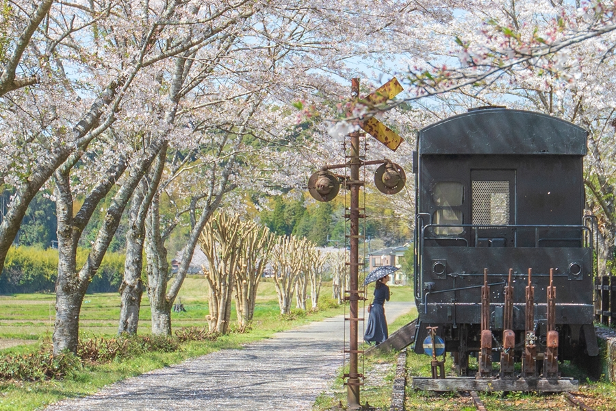 湯之尾駅跡の桜:伊佐市菱刈にある隠れた花見スポット