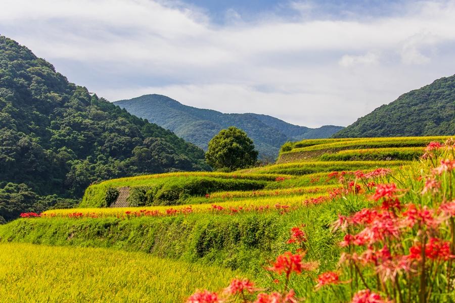 おごっ段の華の棚田 秋の風景を訪ねてみた【いちき串木野市】